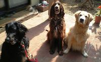 three_dogs2